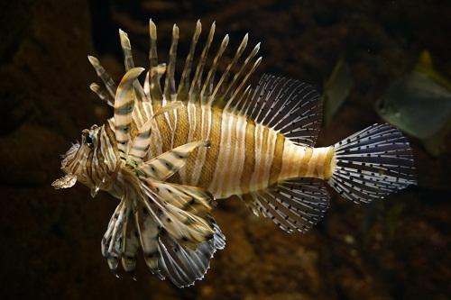 acuario1.jpg