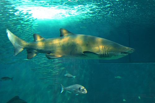 acuario3.jpg